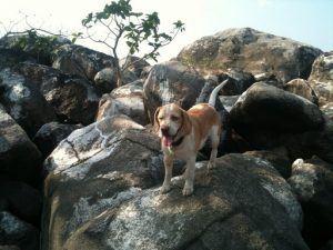 Malawi mit Hund