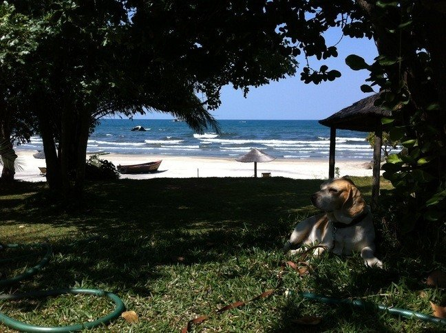 Camping am Lake Malawi mit Hund