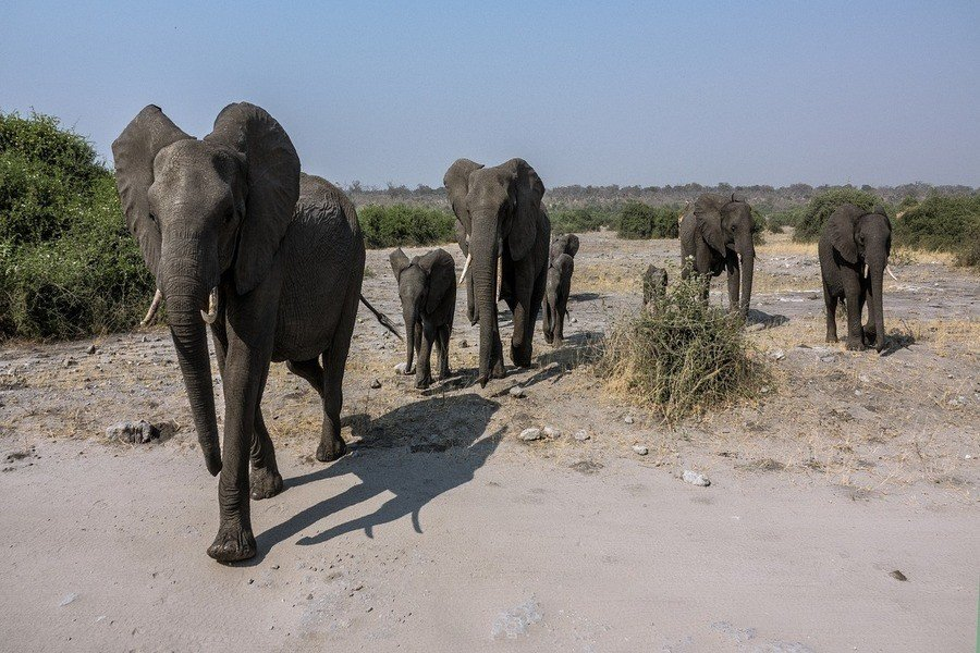 Tiere in Botswana