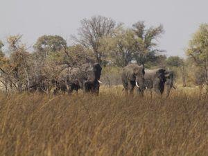 Makoro Trips Okavango Delta, Camping.