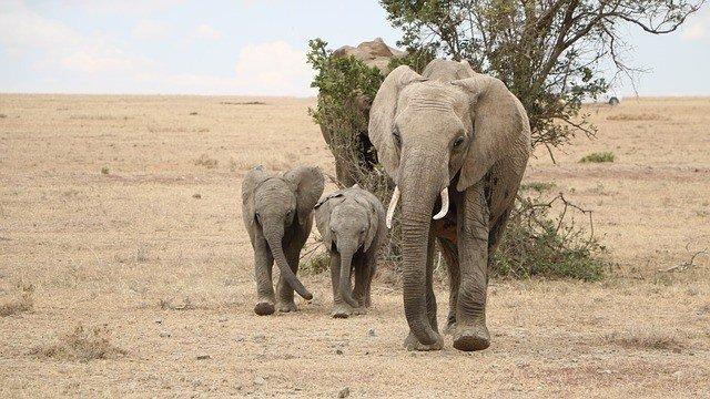 Botswana Selbstfahrer Safari