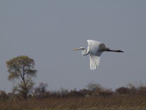 Okavango Delta Unterkünfte und Camping Tipps.