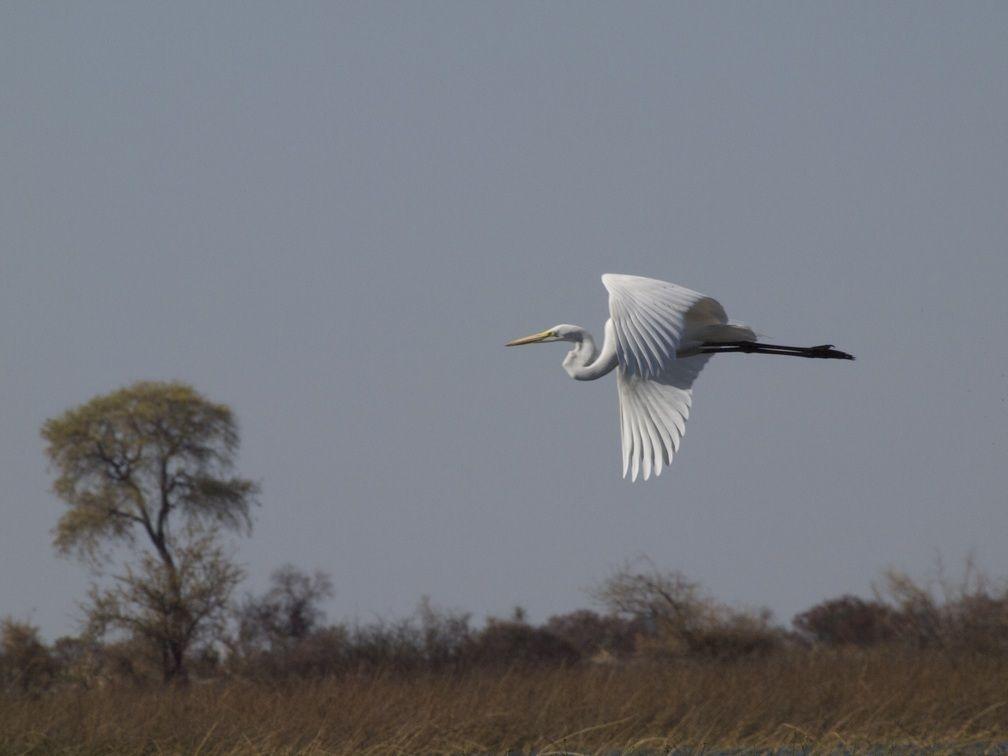 Okavango Delta Unterkünfte und Camping Tipps
