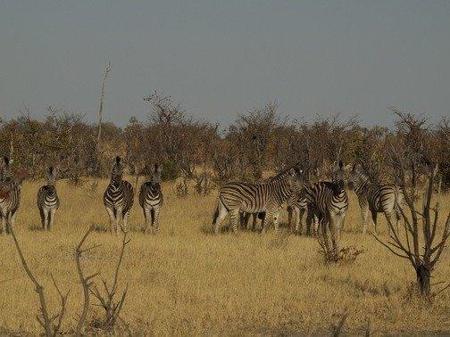 Lodges Botswana Okavango Delta, Camping and Boat Tours.