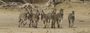 Bwabwata National Park, Namibia