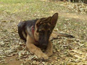 Dog puppy at Rainbow River Lodge