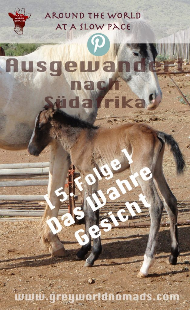 Auswandern nach Südafrika - eine Lodge in der Karoo inmitten von Wildtieren in einem Naturreservat; das war mein Traum. Sollte er nun platzen?