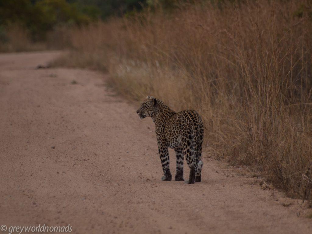 Leopard near Pretoriuskop