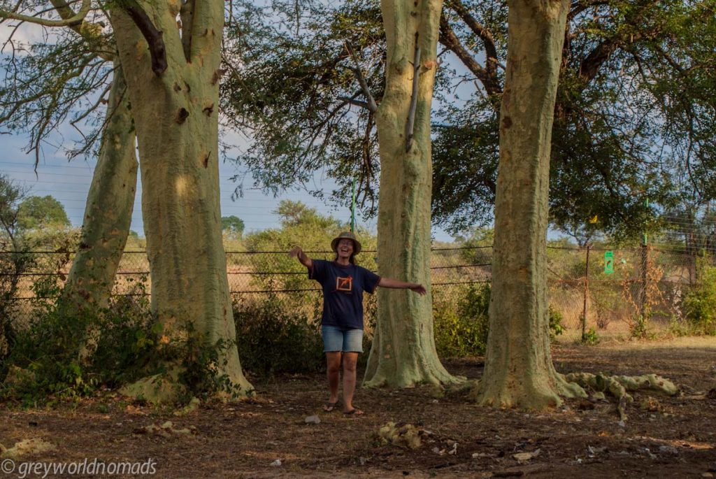 Marcelle between fever trees at Satara Camp