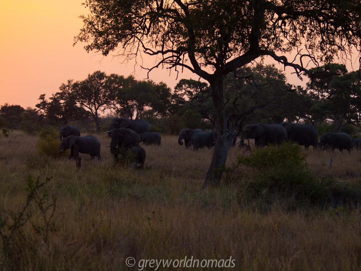 Herds of elephants