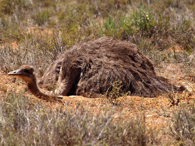 Aufbruch in die kleine Karoo