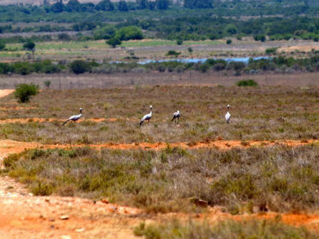 Aufbruch in die Karoo