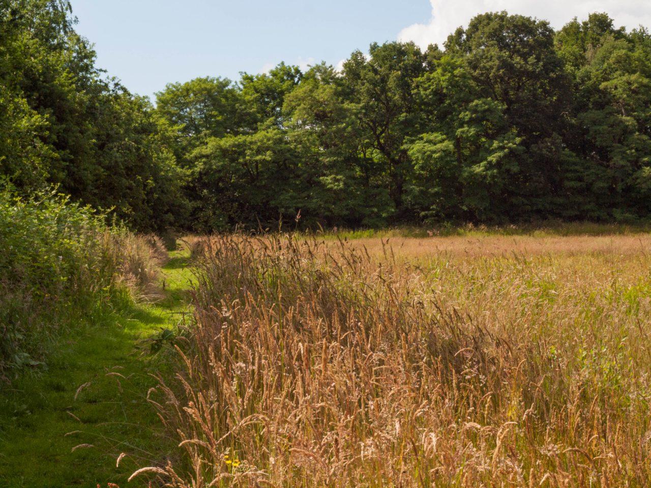 Boelekeerl Path