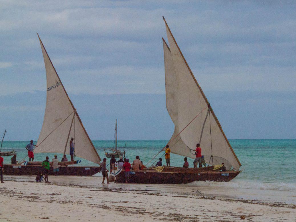 Dohws in Zanzibar