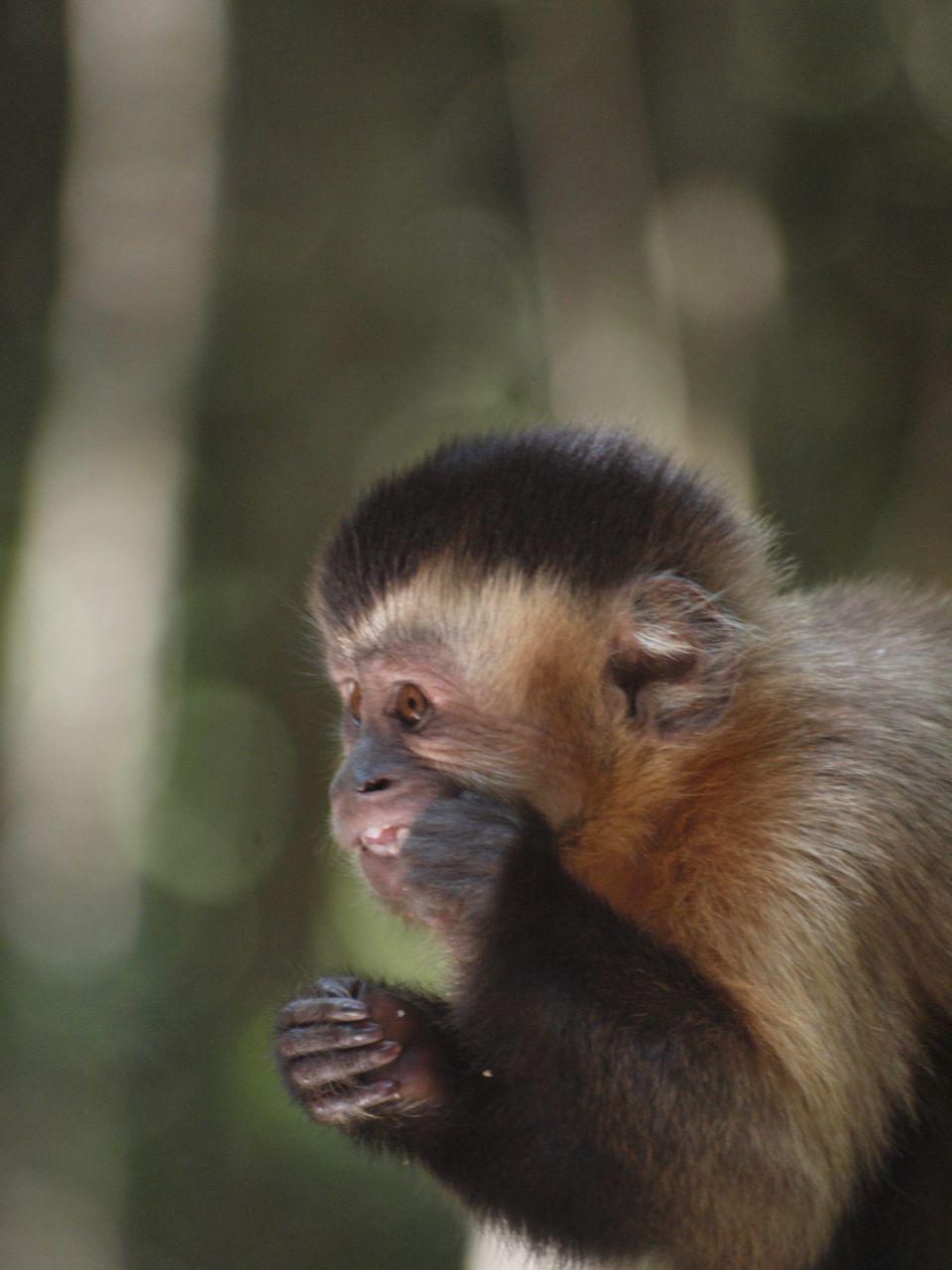 Monkey Land, Plettenberg Bay © greyworldnomads