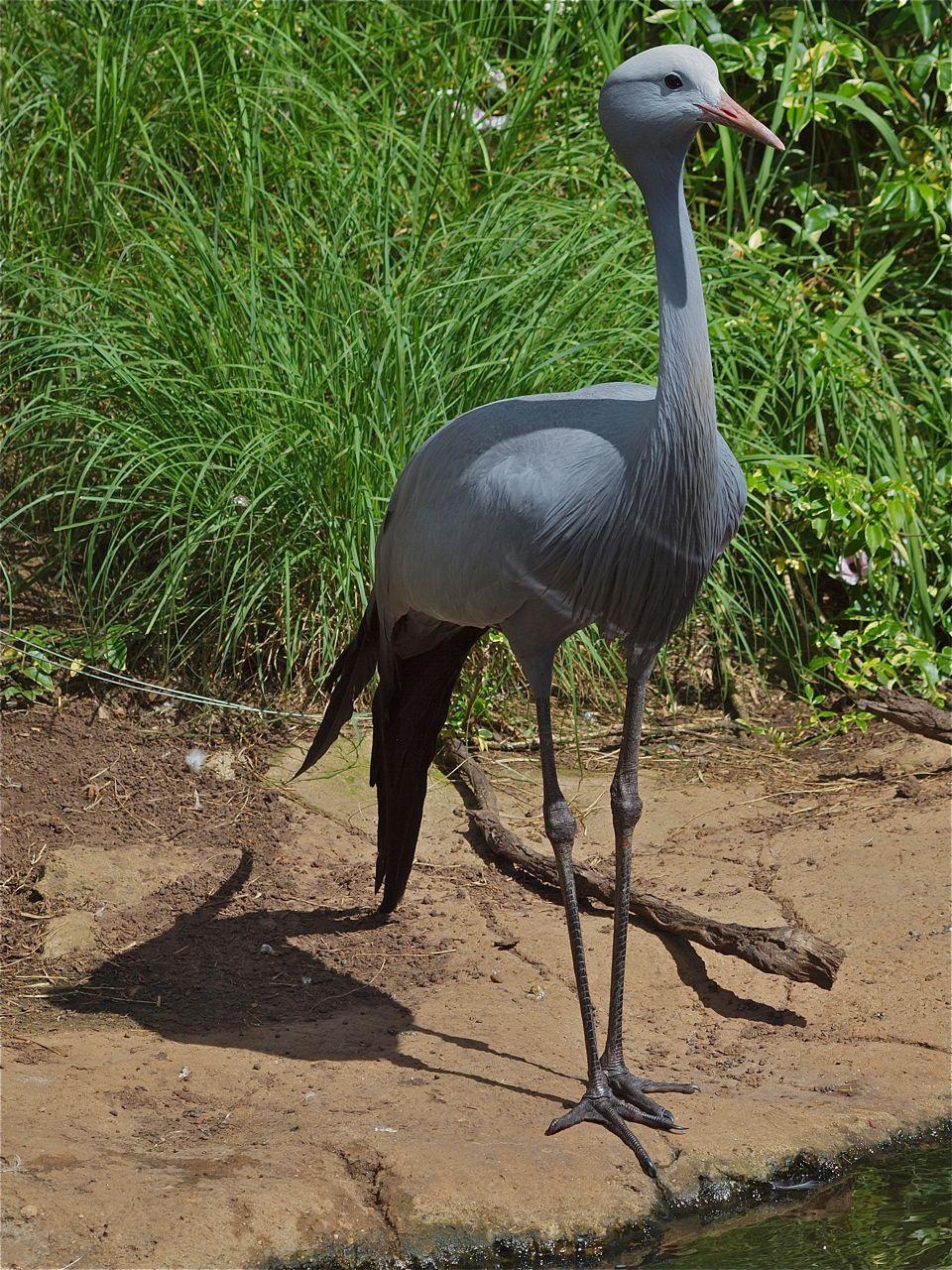 Birds of Eden, Plettenberg Bay © greyworldnomads