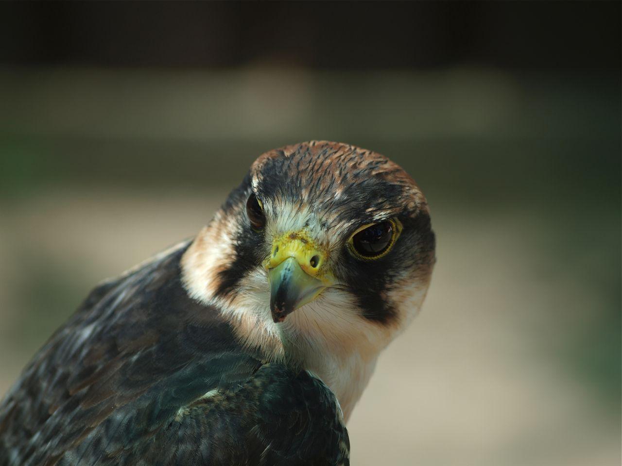 Birds of Eden, Plettenberg Bay ©greyworldnomads