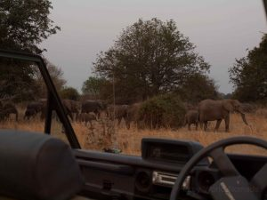 Safari in South Luangwa National Park