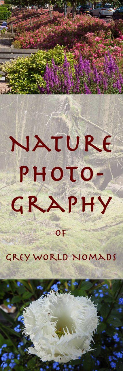 nature-photography-pin