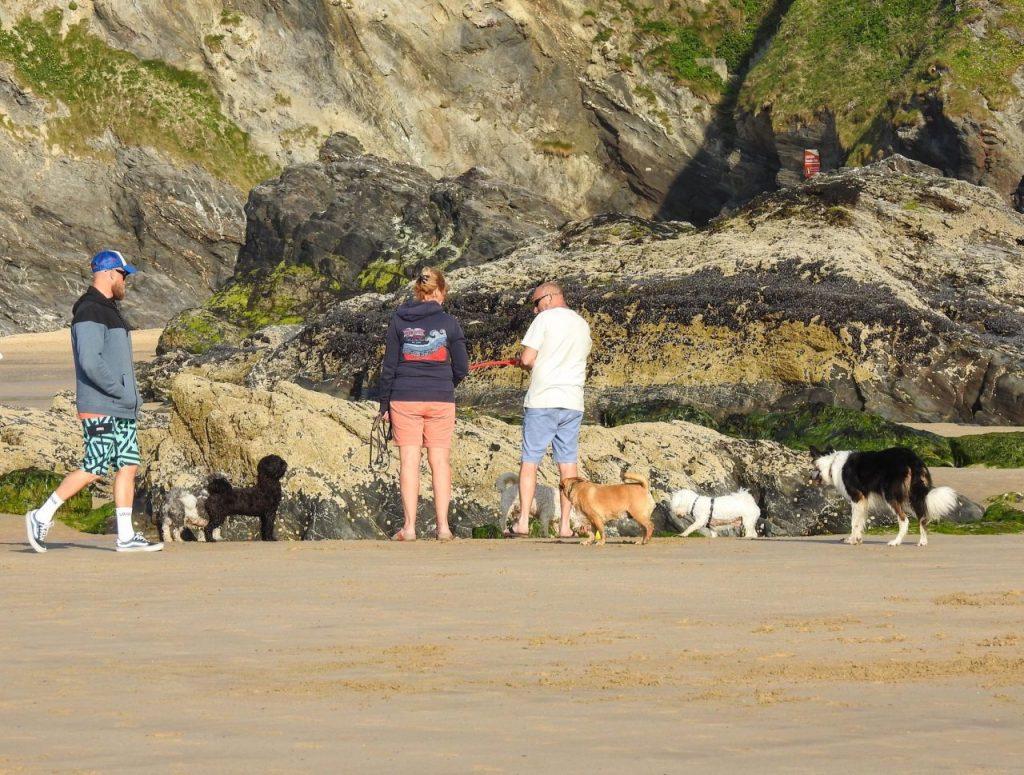 Newquay Cornwall Holidays On The Beach - Dog-friendly Newquay