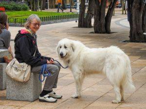 Dog-friendly San Sebastián, Spain
