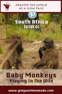 baby-monkeys-southafrica