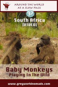 baby-monkeys-southafrica