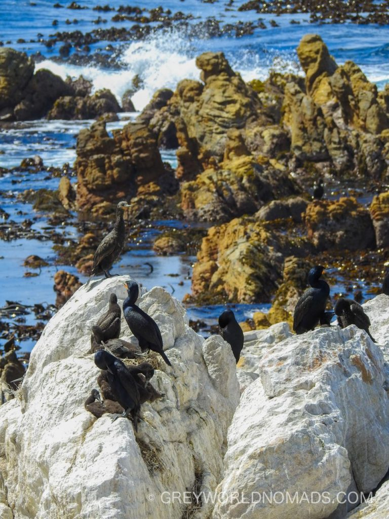 Stony Point Pinguin Colony, Betty's Bay, South Africa