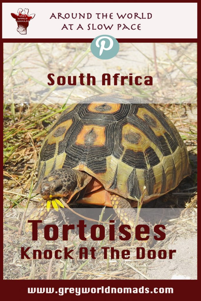 tortoises-southafrica-2