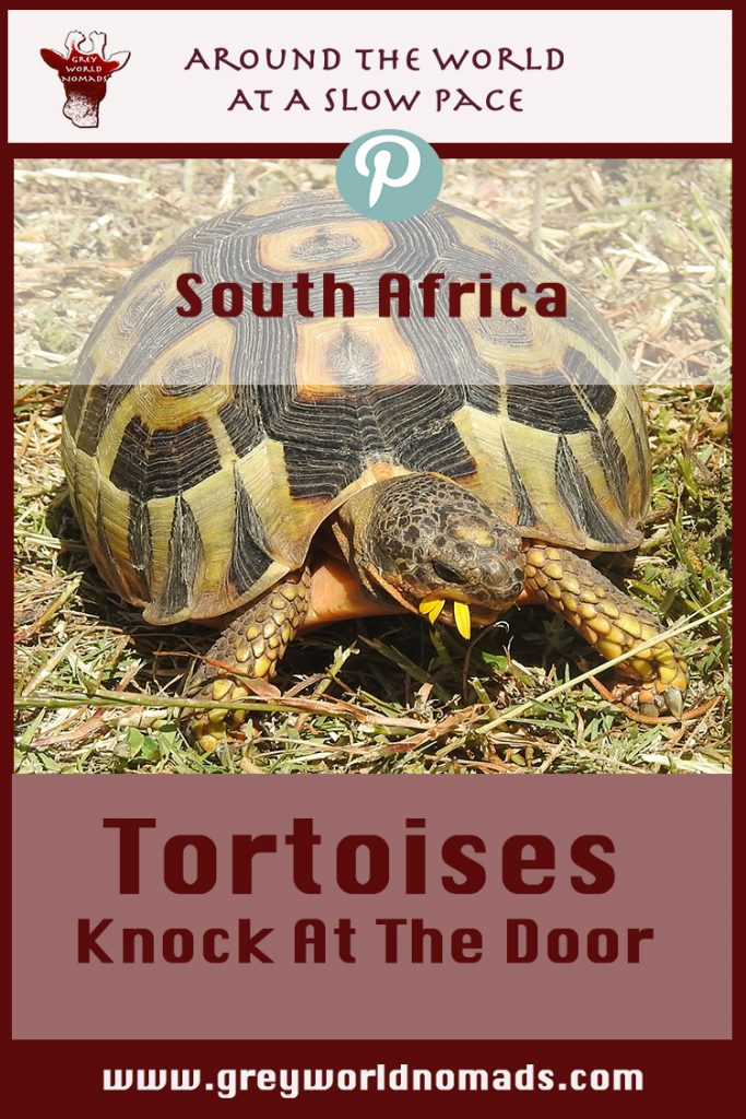 tortoises-southafrica