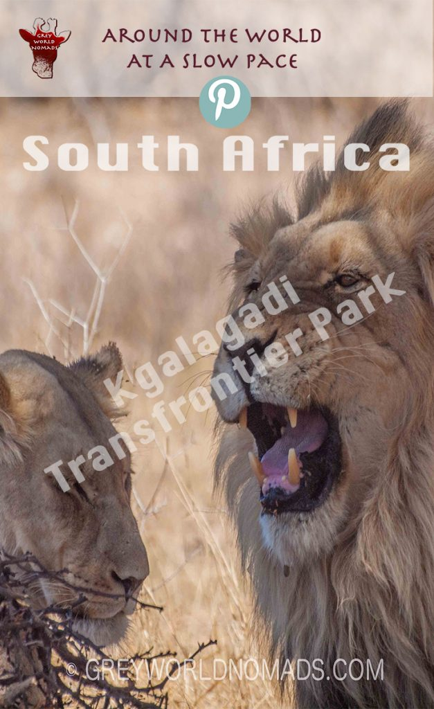 kgalagadi-frontier-park-southafrica-2