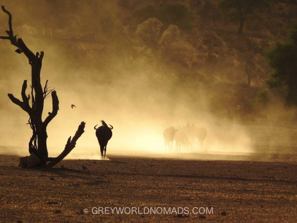 Kalahari National Park