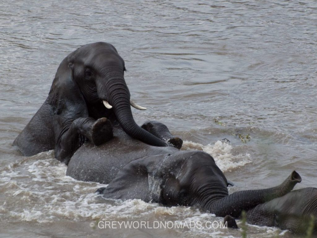 young-elephants-in-water-kruger-southafrica-1.jpg