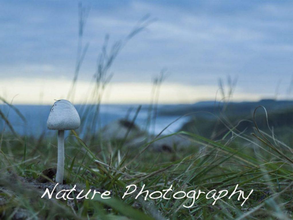 Nature Photography - Art Nomad Studio