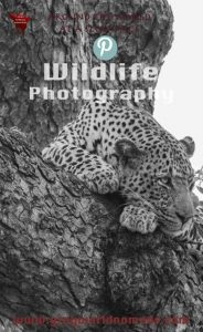 Marcelle's Wildlife Photography: Leopard in Kruger National Park, South Africa Marcelle's Wildtierfotografie: Leopard im Kruger National Park, Südafrika