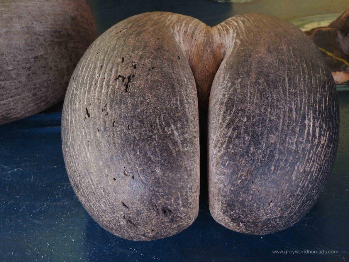 curieuse-seychelles-127
