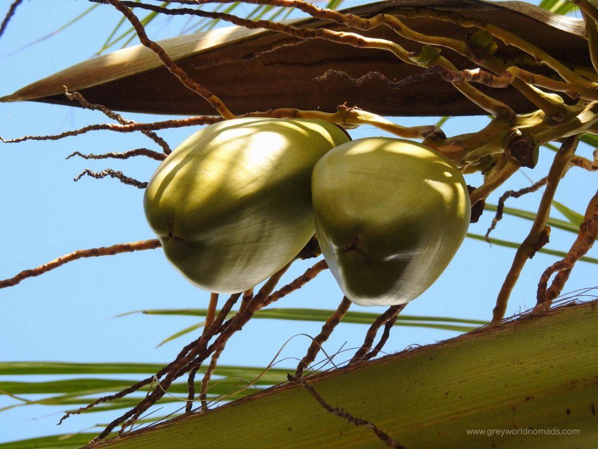 curieuse-seychelles-159