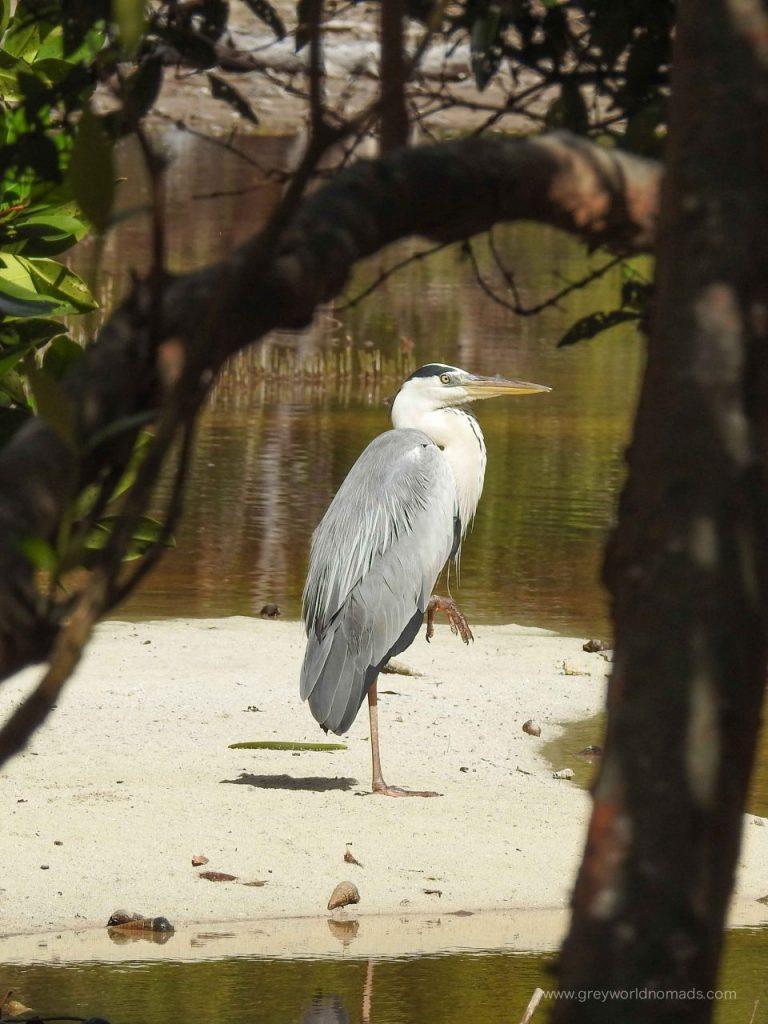 curieuse-seychelles-179