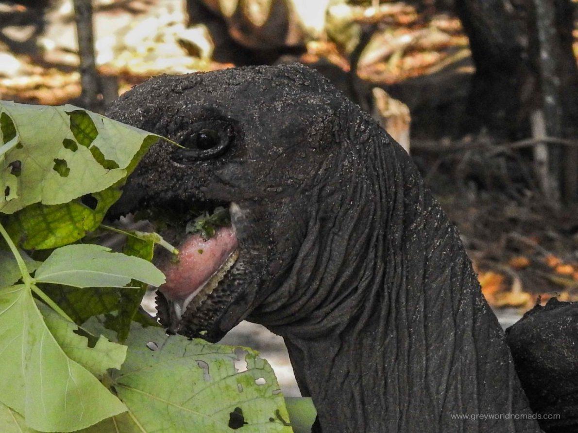 curieuse-seychelles-80