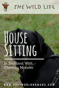 House Sitting In Scotland With Chewing Monster-2