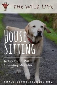 House Sitting In Scotland With Chewing Monster
