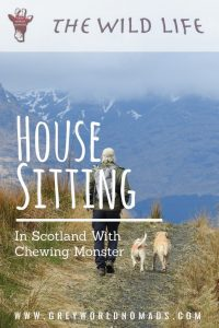 House Sitting In Scotland With Chewing Monster-3