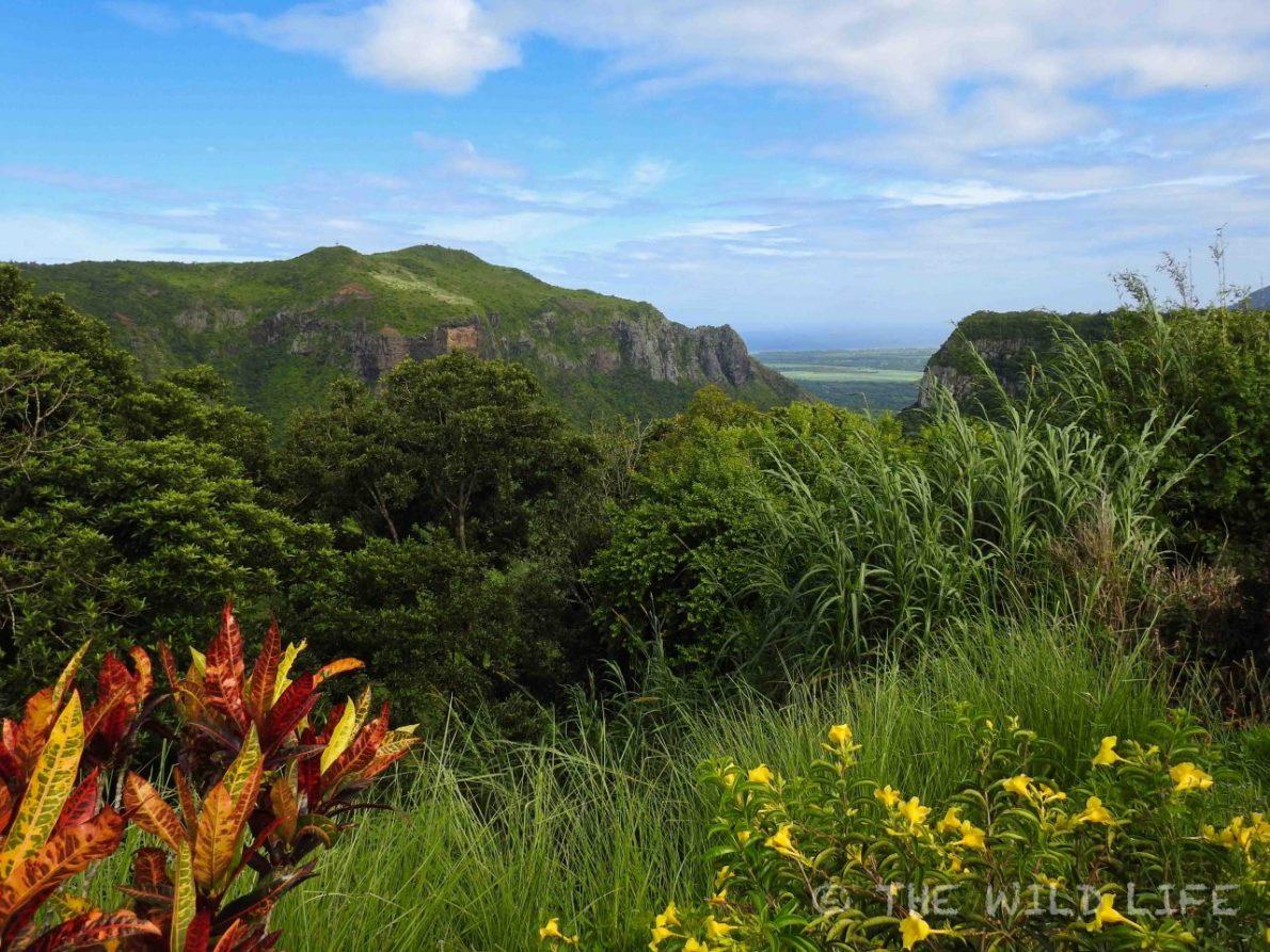 mauritius-island-234