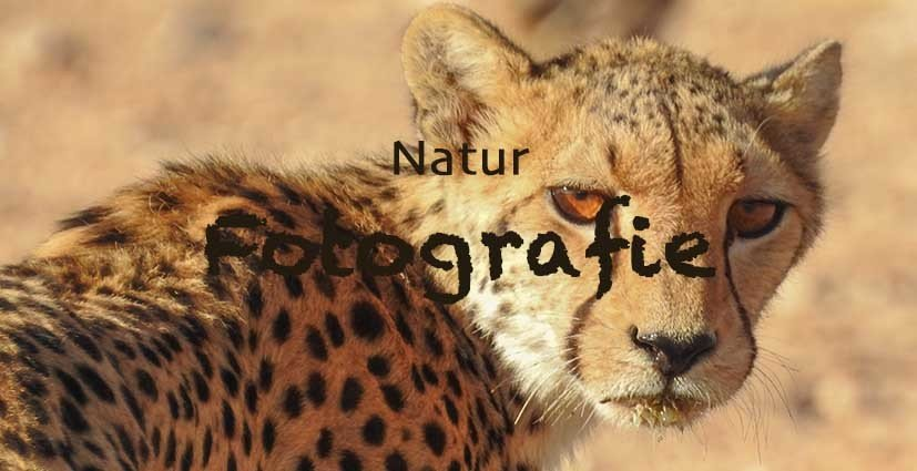 Natur Fotografie