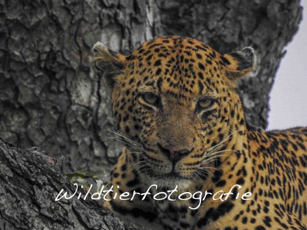 In Nationalparks und Naturreservaten rund um die Welt gelingt es Natur - und Tierfreunden am Besten, die Faszination von Wildtieren und Landschaft in ihrer Fotografie festzuhalten. Für Aussteiger und Weltnomaden die Gelegenheit, viel Zeit in ausnehmend schönen, abgelegenen Orten zu verbringen.