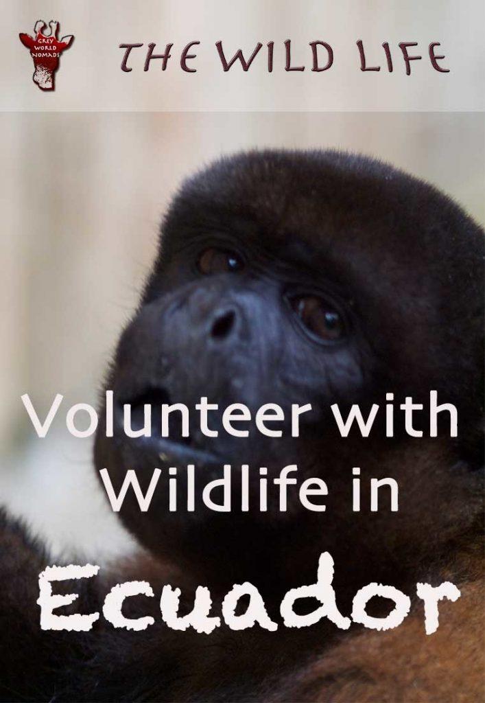 volunteer with wildlife in Ecuador