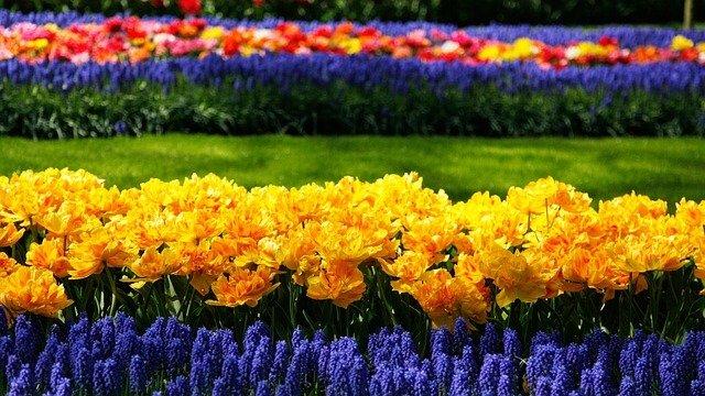 Blumenpark in Holland, Holland im Mai, Blumenparade in Holland, Tulpenblüte Holland wann, Busreisen zum Keukenhof, Amsterdam Keukenhof öffentlichen Verkehrsmitteln, alles über Tulpen. Keukenhof im Sommer. Tulpenblüte keukenhof 2019. Tulpenschau Holland.