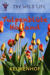 Tulpen Amsterdam Keukenhof, Wann ist Tulpenblüte in Holland, Keukenhof Amsterdam Entfernung, Keukenhof Eintrittspreise 2018, Flusskreuzfahrten Holland Tulpenblüte, Busfahrt nach Holland, Keukenhof Hunde erlaubt, Öffnungszeiten Keukenhof 2018, Reise nach Keukenhof, Tulpenschau Holland 2018, Keukenhof im Sommer, Keukenhof Öffnungszeiten Ostern, Holland im April, Busreisen nach Holland zur Tulpenblüte, amsterdam sehenswürdigkeiten tulpen, Holland zur Tulpenblüte.