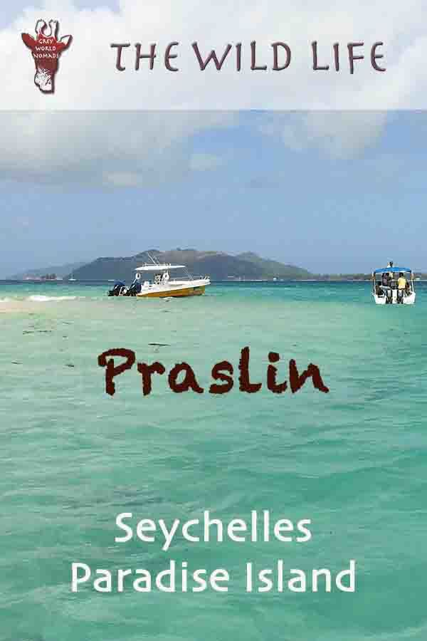 Your comprehensive Praslin Travel Guide with Praslin island map and information about Mahe to Praslin Ferry cost, Cat Cocos schedule and Mahe to Praslin flight. The best beaches in Seychelles, Anse Lazio beach, and Curieuse Island Seychelles pictures. Decide between Mahe or Praslin and choose your hotel and activities. mahe to praslin flight, ferry mahe praslin, praslin to la digue, ile curieuse seychelles.