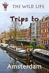 Trips to Amsterdam, Cool Places to Stay in Amsterdam.